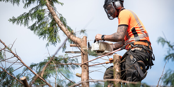 tree surgeon in Ashurst
